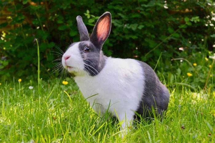 rabbit-friendliest-animals