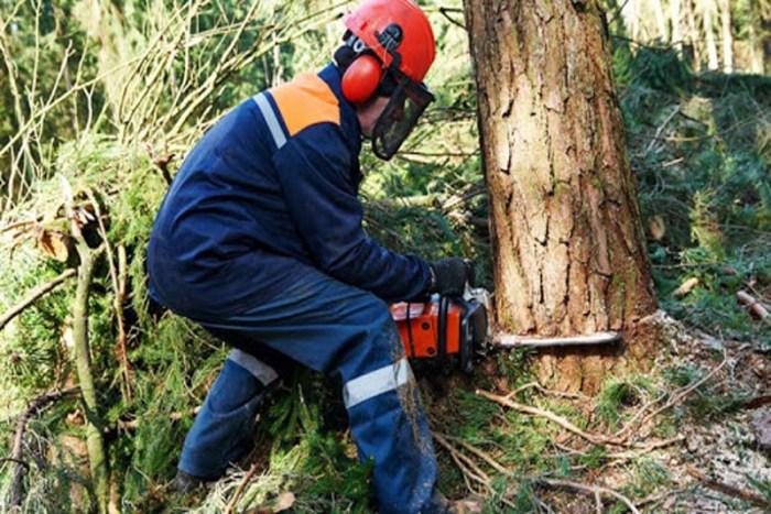 logging-worker-most-dangerous-jobs-in-the-world