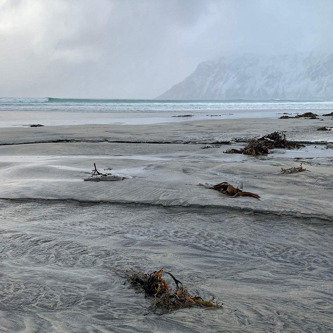 Algas en Skagsanden