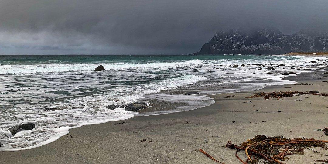 Algas sobre la arena