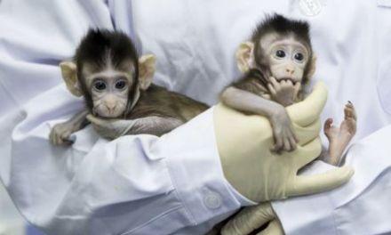#Dieselgate : Volkswagen, au mépris de la vie humaine et animale