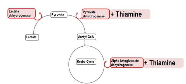 Image result for pyruvate dehydrogenase thiamine