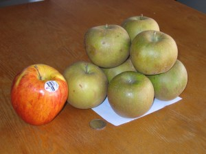 Warren Russets next to a Gala Apple