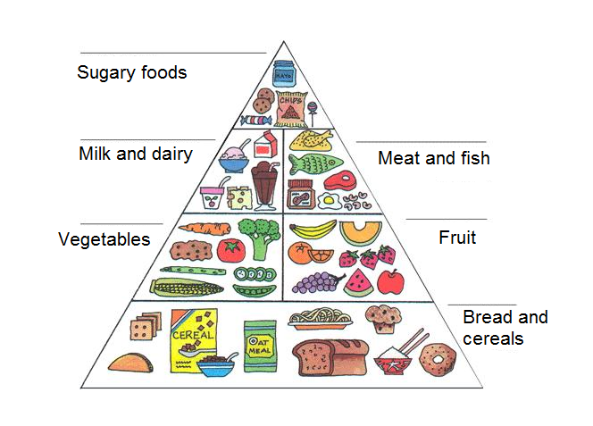 The Failure Of The Food Pyramid Derek Christensenderek
