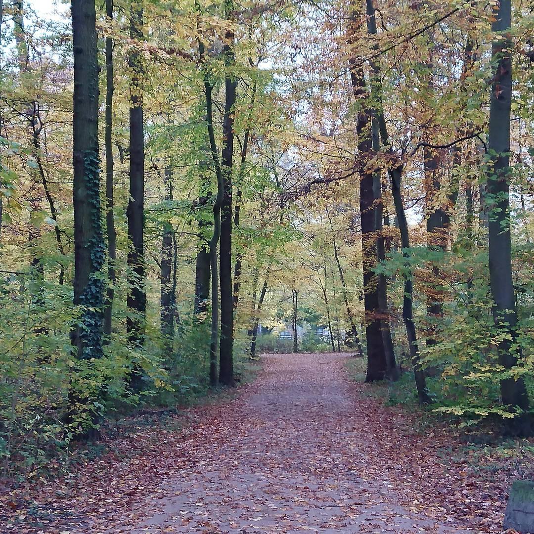 Schöner Spaziergang im herbstlichen kölner Stadtwald