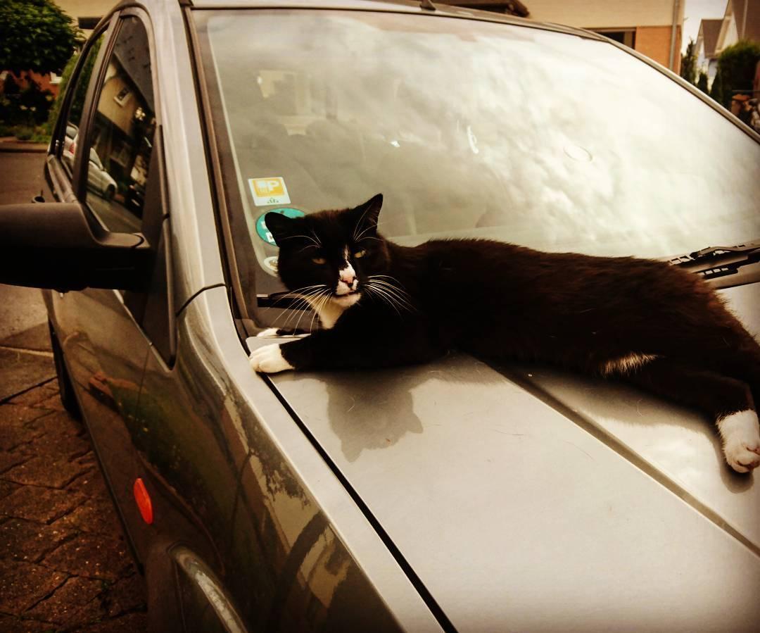 Na, wer liegt den da auf meinem #Auto ? #Katze #cat