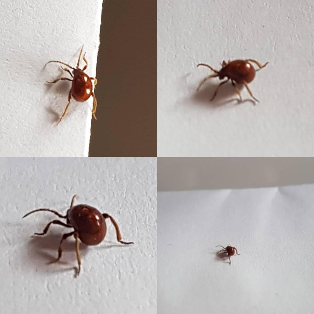 Was ist das? Ein Käfer? Zecke?