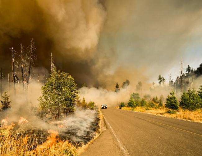 Skyldes de voldsomme skogbrannene i USA, Australia og andre land klimaendringer?