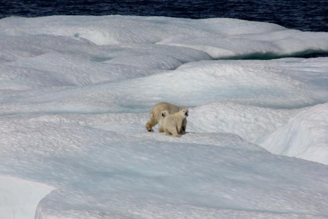 Klimarealistene har uten forespørsel sendt en egen vurdering til Høyesterett. Det er ikke konsensus om global klimakrise.