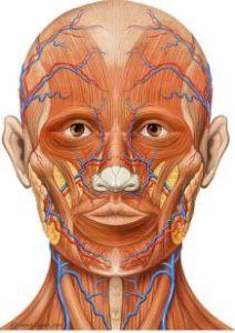 Milliyetçiliğin AnatomisiMilliyetçiliğin Anatomisi