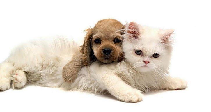 Evcil Hayvan Sahibi Olmanın 10 Faydası