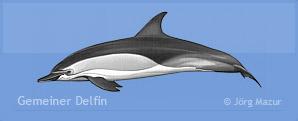 gemeiner-delfin