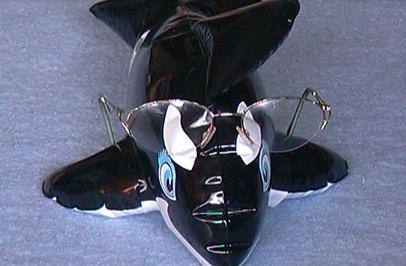 Eine Orca-Oma braucht keine Brille. (Foto: Susanne Gugeler)