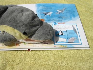 Was sagen diese Wale wohl? (Foto: Susanne Gugeler)