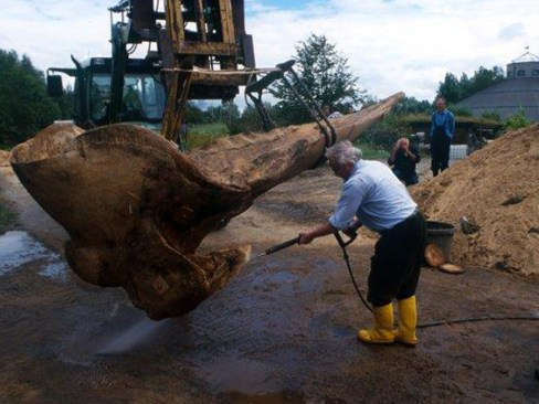 Hier präpariert Günther einen Wal-Schädel. (Foto: Natureum)