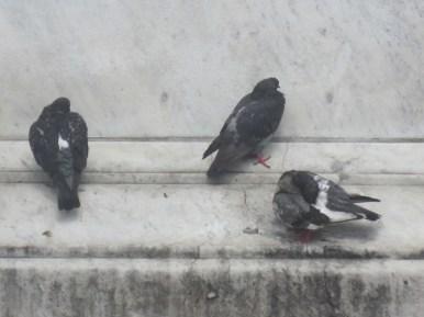 Tauben können lesen ...