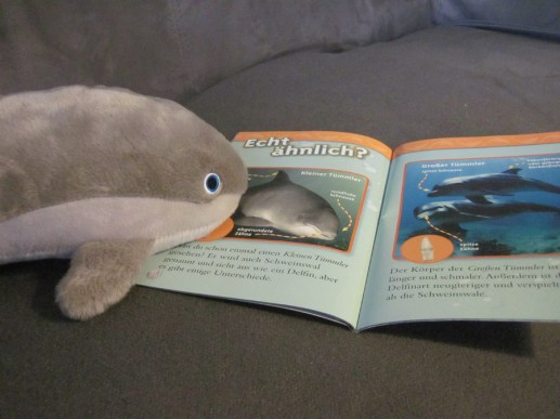Antje sieht sich den Vergleich zwischen Delfin und Schweinswal an. (Foto: Susanne Gugeler)