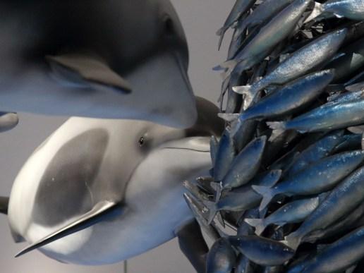Delfine schnappen sich Fische. (Foto: Rüdiger Hengl)