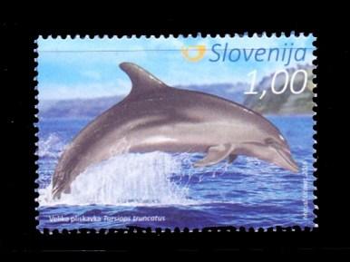 (Matjaž Učakar, Morigenos - Slovenian Marine Mammal Society)