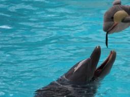 Der Delfin hat bestimmt Hunger. (Foto: Rüdiger Hengl)