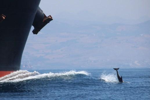 Kopfsprung vor einem Frachtschiff (Foto: Rüdiger Hengl)