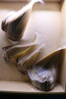 Barten eines Wals (Foto: Frank Blache)