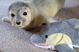 FINN mit ausgestopftem Seehund (Foto: Rüdiger Hengl)