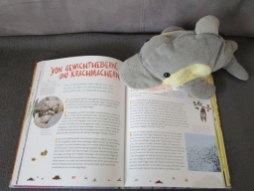 FINN blättert im Buch. (Foto: Susanne Gugeler)