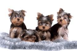 Tiere als Geschenkidee zu Weihnachten? Das Kreisveterinäramt empfiehlt, solch eine Entscheidung gut zu überdenken.