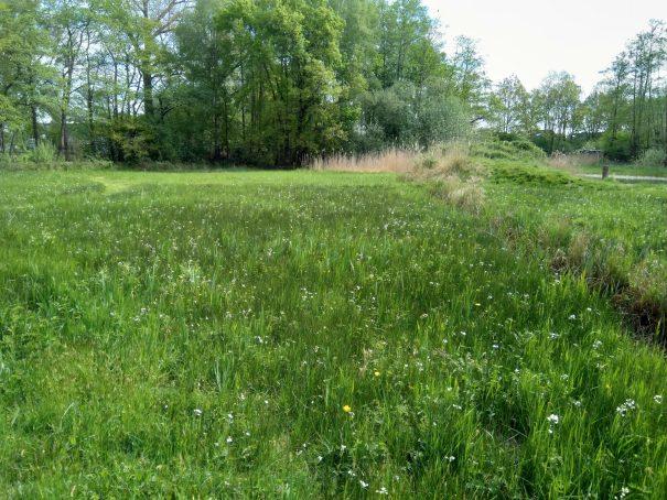Pinksterbloemen lage graslandjes