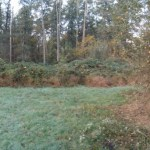 bosrand voor het snoeien