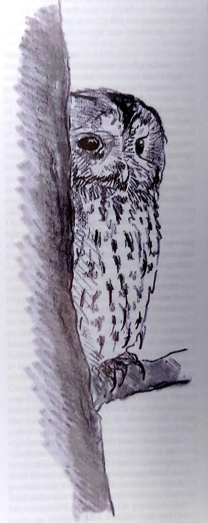 Bosuil - Strix aluco
