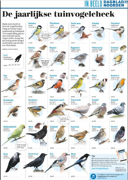 Poster Tuinvogels