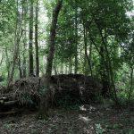 houtstapel in elzenbosje – foto: fotoclub Helmond Noord