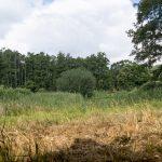gevarieerde oeverbegroeiing – foto: Fotoclub Helmond Oost