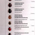 kaart lieveheersbeestjes