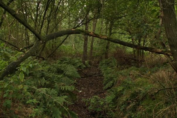 Bosje met veel verstopplaatsen