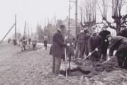 De Historische Kring Eemnes vraagt ….. Eiken geplant langs dijk geplant in 1952