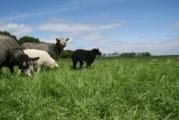 Kijkje in de keuken van agrarisch Eemnes