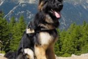 Eemnesser honden genomineerd voor mooiste hond van Nederland!