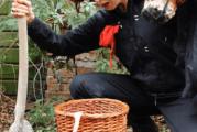 Roos Dansverhalen: We hebben een geitje 2+