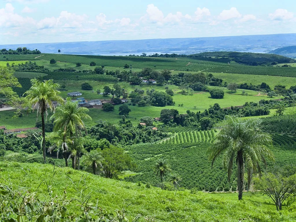 piantagione-caffe-santos-brasile-arabica-monorigine