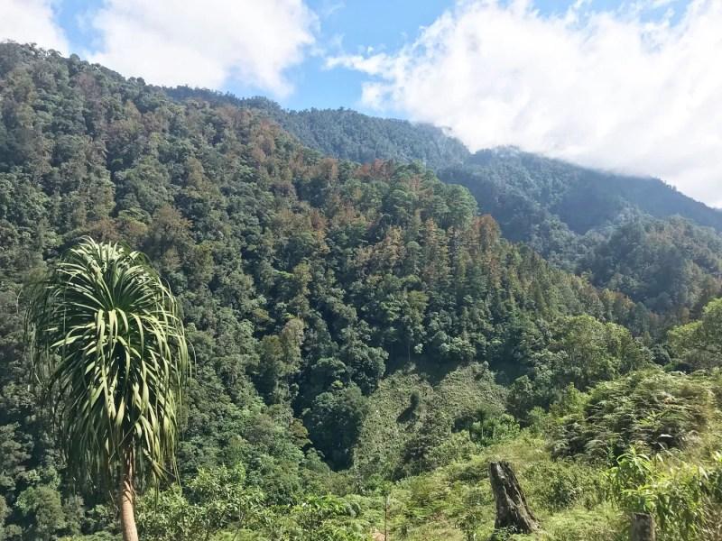 umami-coffee-camp - dersut caffè in honduras