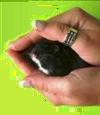 hamster in een kommetje optillen
