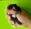 hamster wurggreep