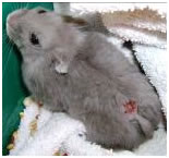 bijtwonden hamster dwerghamster