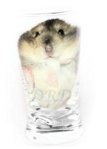 DWERGHAMSTER IN EEN GLAS