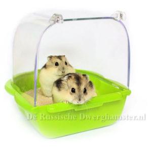 dwerghamtser neemt een zandbad in een hamster zandbakje met chinchillazand