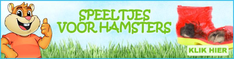 speeltjes voor hamsters kopen