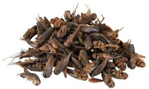 gedroogde krekels voor dwerghamster snack